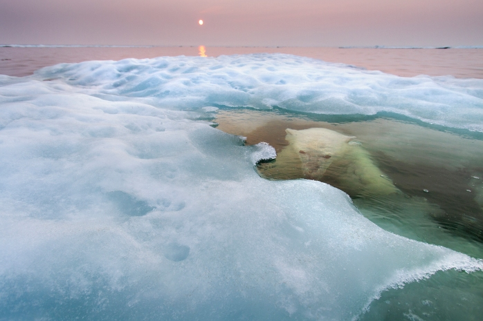 The water bear - (Paul Sounders / Wildlife Photographer of the Year 2013)