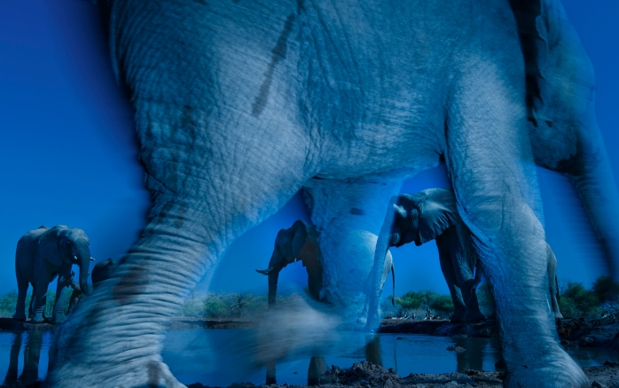 Essence of elephants - (Greg du Toit / Wildlife Photographer of the Year 2013)