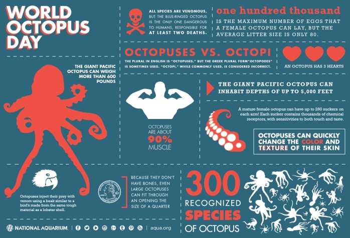 octopus infographic