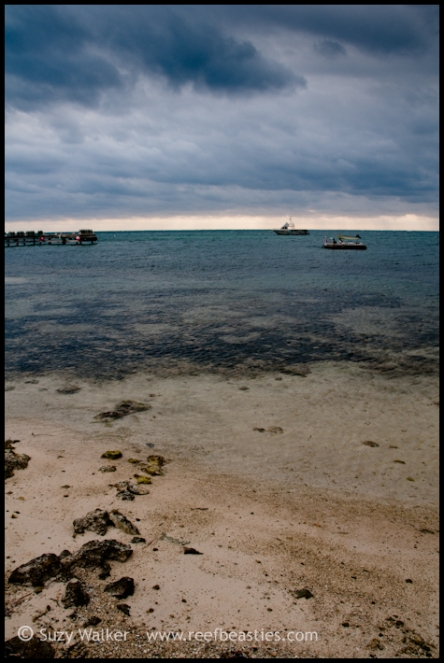 cayman-beach_31782186411_o