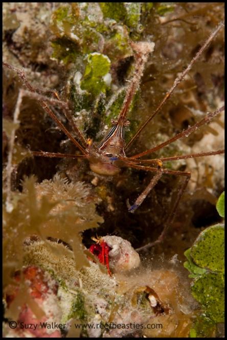 crab-get-together_31750787262_o