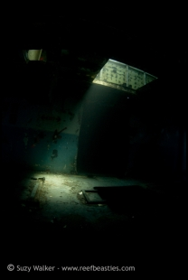 kittewake-inside-5_31751113542_o